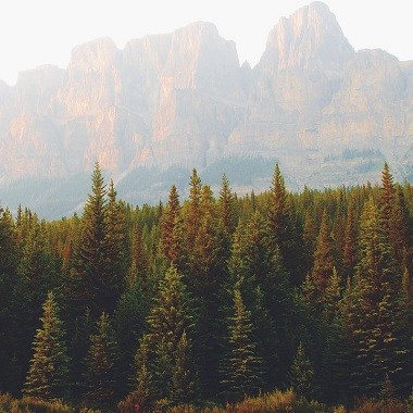 futuro sostenibile foresta