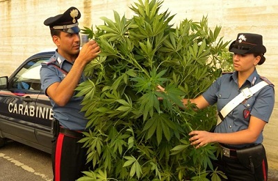 foto sequestro pianta droga