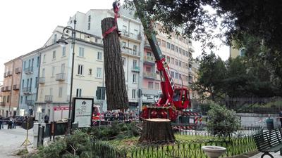 Campobasso, tagliata sequoia malata in piazza Cesare Battisti