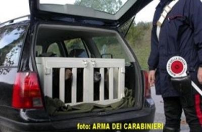 foto-rinvenimento-cani-da-tartufo