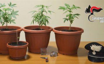 sequestro piante marijuana 20.01.2017