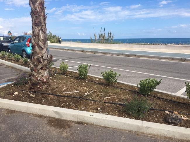 Termoli, furto sul lungomare nord rubate oltre 100 piante