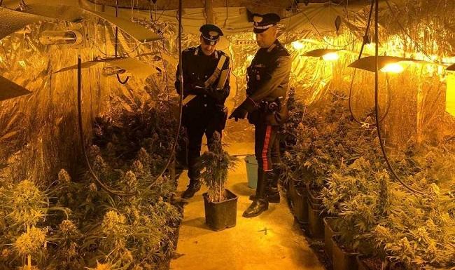 Isernia, marijuana: scoperta rigogliosa piantagione, preso il responsabile