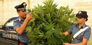 foto piante marijuana