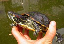 foto rinvenimento tartaruga