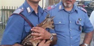 Carabinieri con cerbiatto