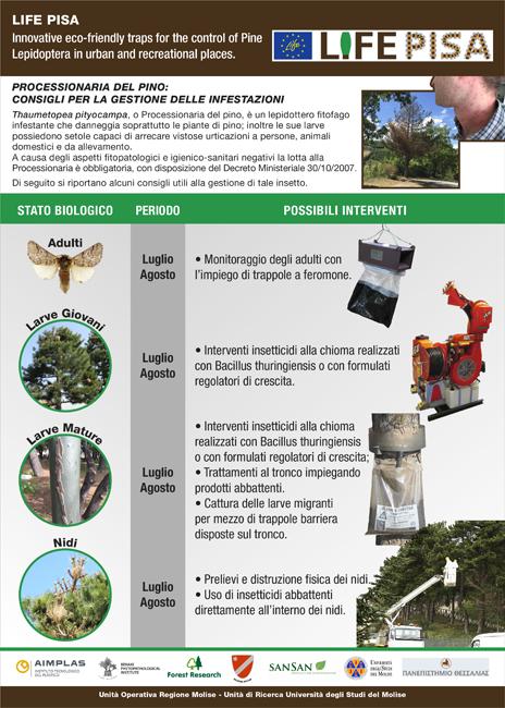 Termoli, processionaria del pino: le nuove disposizioni