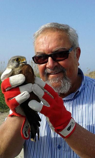 gheppio falco tinniculus salvato