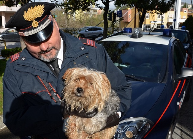 Isernia, salvato cagnolino abbandonato sulla provinciale