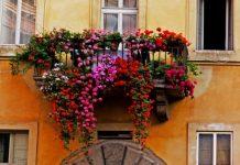 agosto in fiore