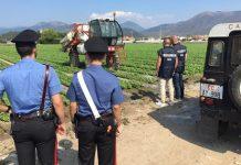 controllo azienda agricola