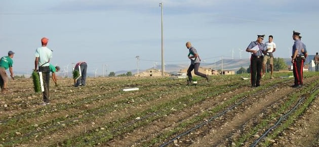 controllo impresa agricola