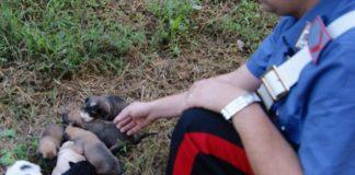 Roccamandolfi trovati salvati alcuni cuccioli cane abbandonati