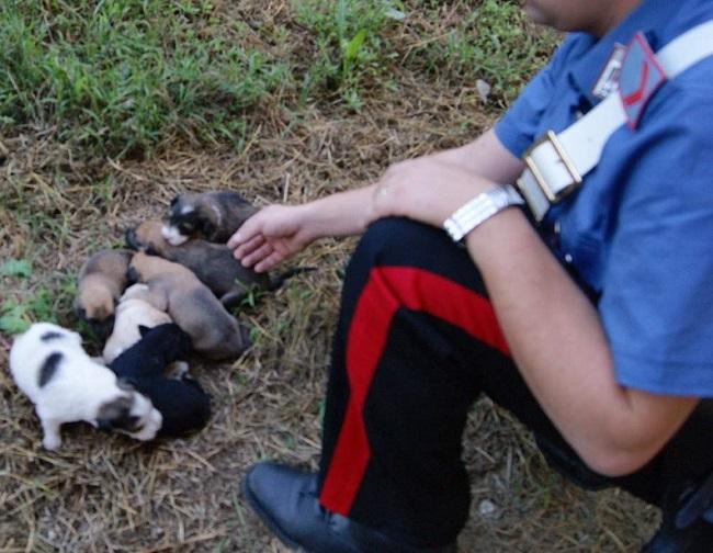 Isernia trovati salvati alcuni cuccioli cane abbandonati