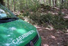 controlli carabinieri forestali