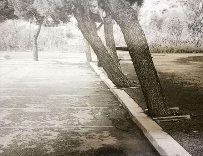 rio vivo alberi
