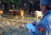 controlli carabinieri forestale