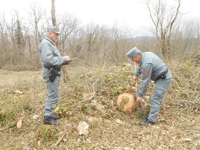 controlli taglio bosco