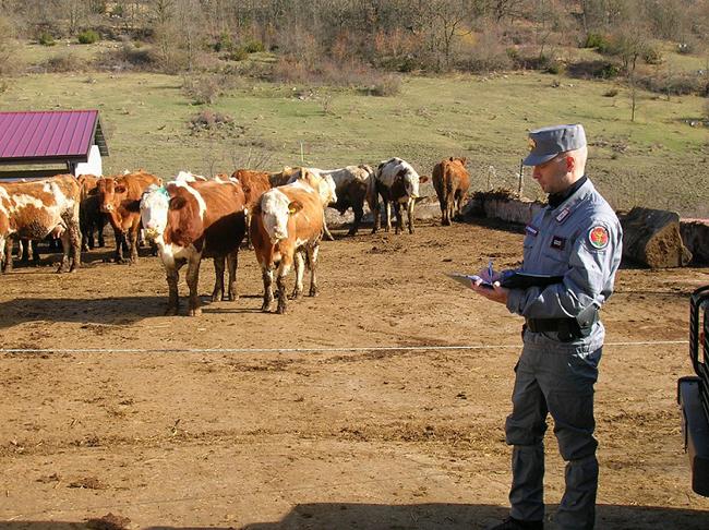 controlli polizia veterinaria