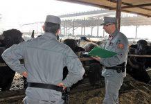 controlli dei Carabinieri Forestali