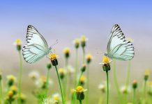 natura farfalle