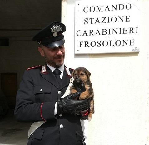 ritrovamento cagnolino Frosolone