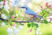 uccellino natura