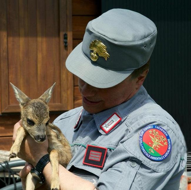 Animali cucciolo di capriolo e carabiniere forestale