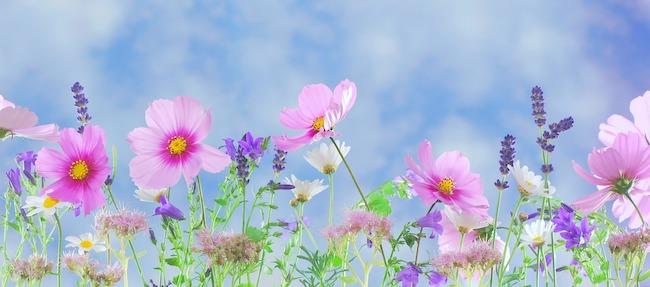 fiori prato