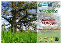 querce secolari campolieto-19-maggio-2019