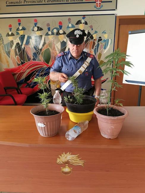 foto piante cannabis sequestrate