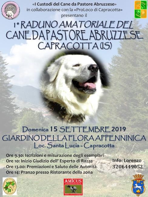 1° Raduno Amatoriale del Cane da Pastore Abruzzese a Capracotta