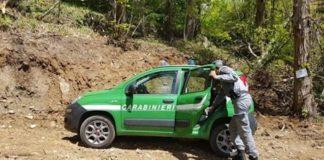 controllo forestali