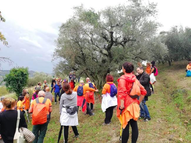 camminata tra olivi molise