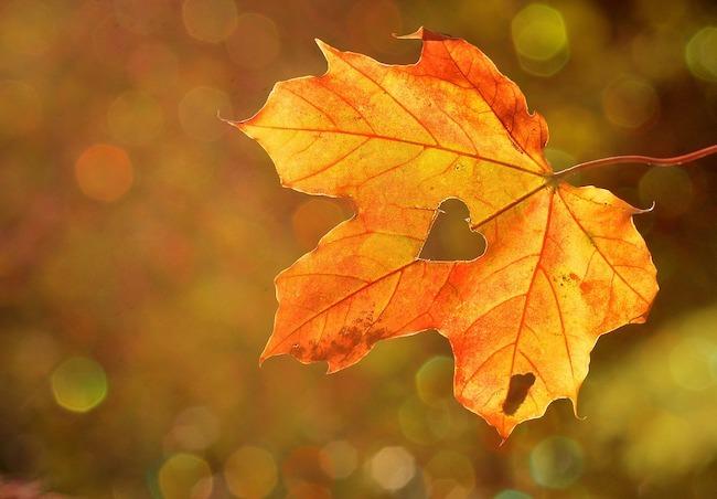 autunno cuore