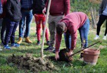 festa albero Riccia 2019
