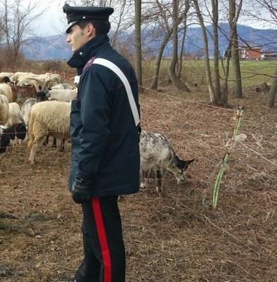 controlli pastorizia