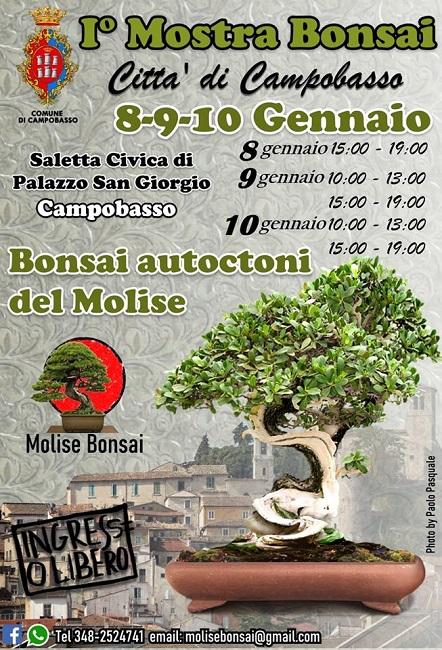 mostra bonsai campobasso 2020