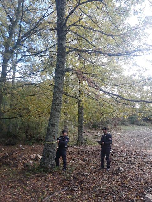 azione forestali
