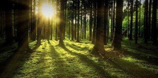 bosco raggio di sole