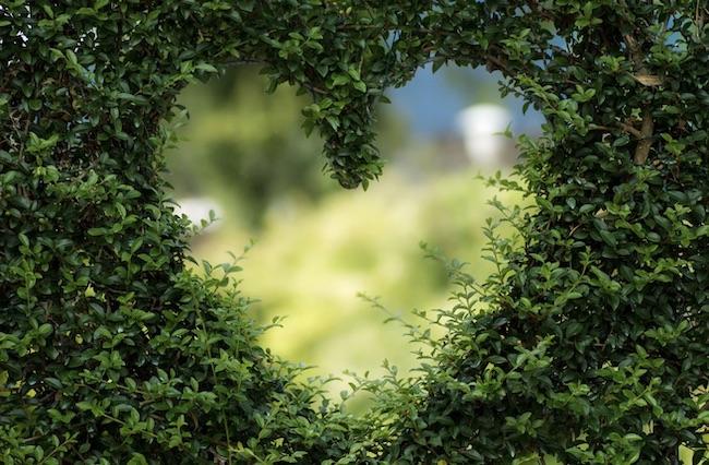 siepe cuore