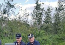 sepino forestali