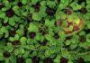 cuore musica verde