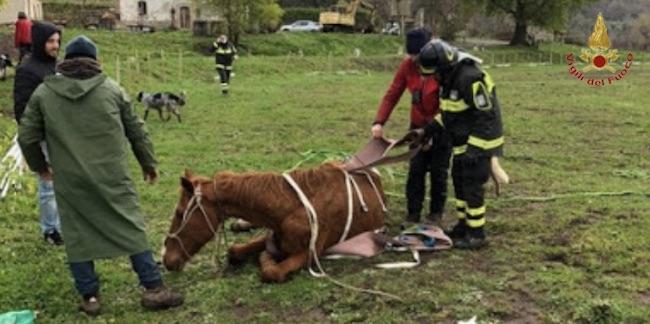 salvataggio cavallo campobasso