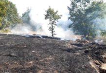 incendio boschivo cercemaggiore