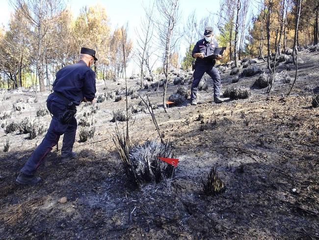 intervento incendio boschivo cercemaggiore