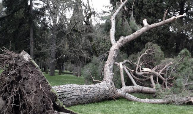 albero villa comunale isernia