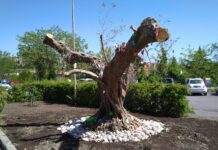 albero teresa d'elisa