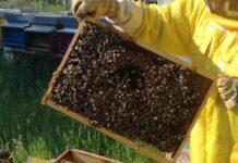 biomonitoraggio api pozzilli