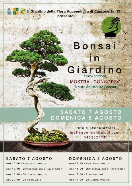 bonsai in giardino 2021